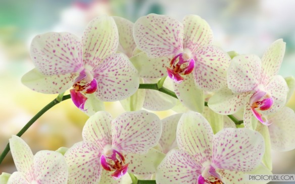beautiful-pictures-of-flowers-desktop-i18